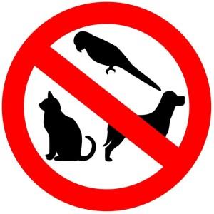 no-pets-allowed
